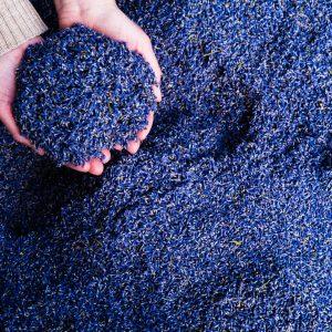 Bulk Angustifolia Lavender